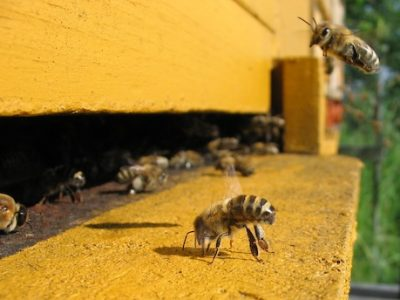 127. How can we cooperate? A new lesson from the bees