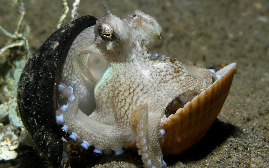 World octopus day: What the octopus can teach us about hunting for bargains